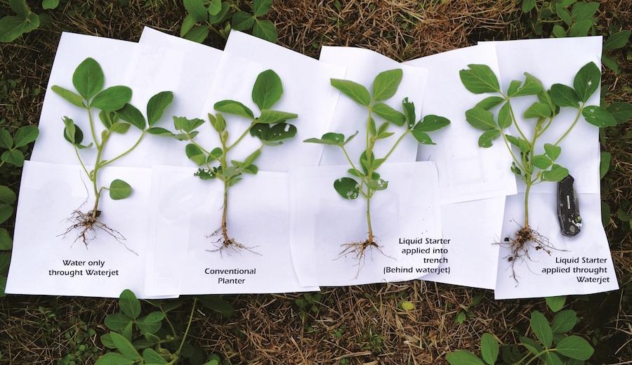 Comparaison de racines de soja plantés de façon classique et avec des jets de fluide.