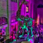 Une nuit au musée du ROM
