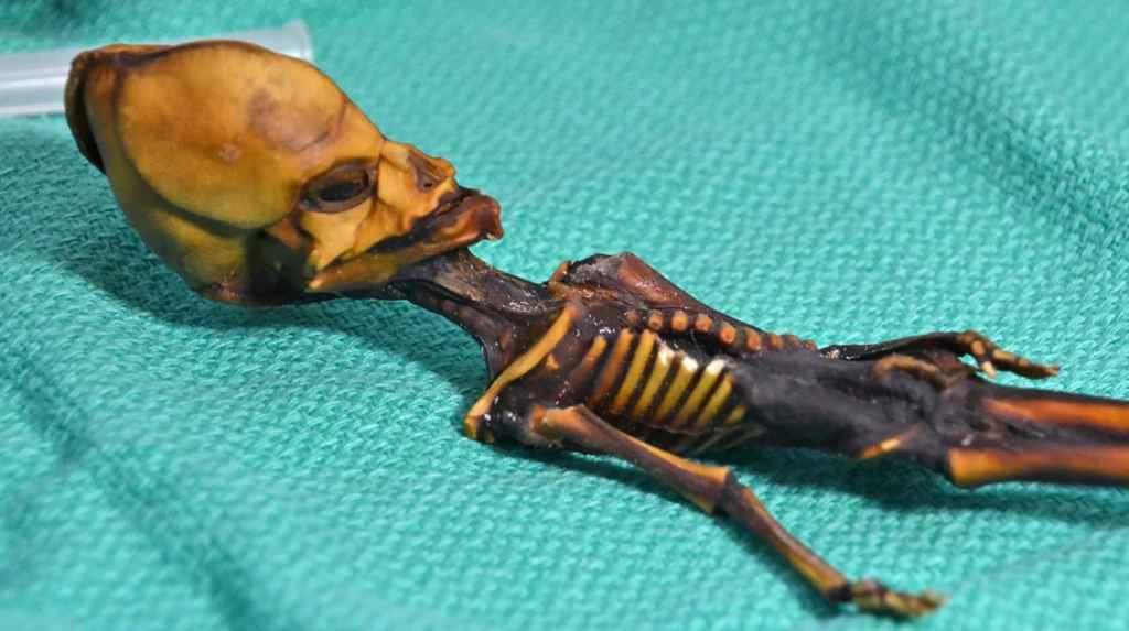 squelette-Atacama