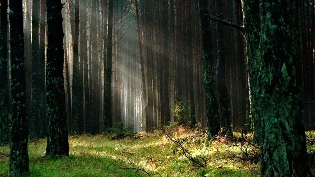 arbres forêt