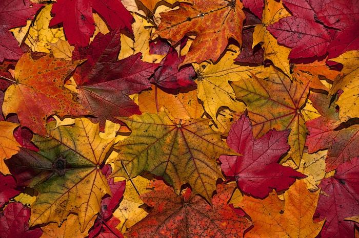 Résultats de recherche d'images pour «automne couleur feuilles»
