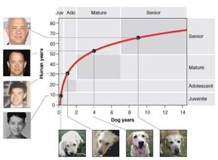 Comparaison des âges de l'humain et du chien
