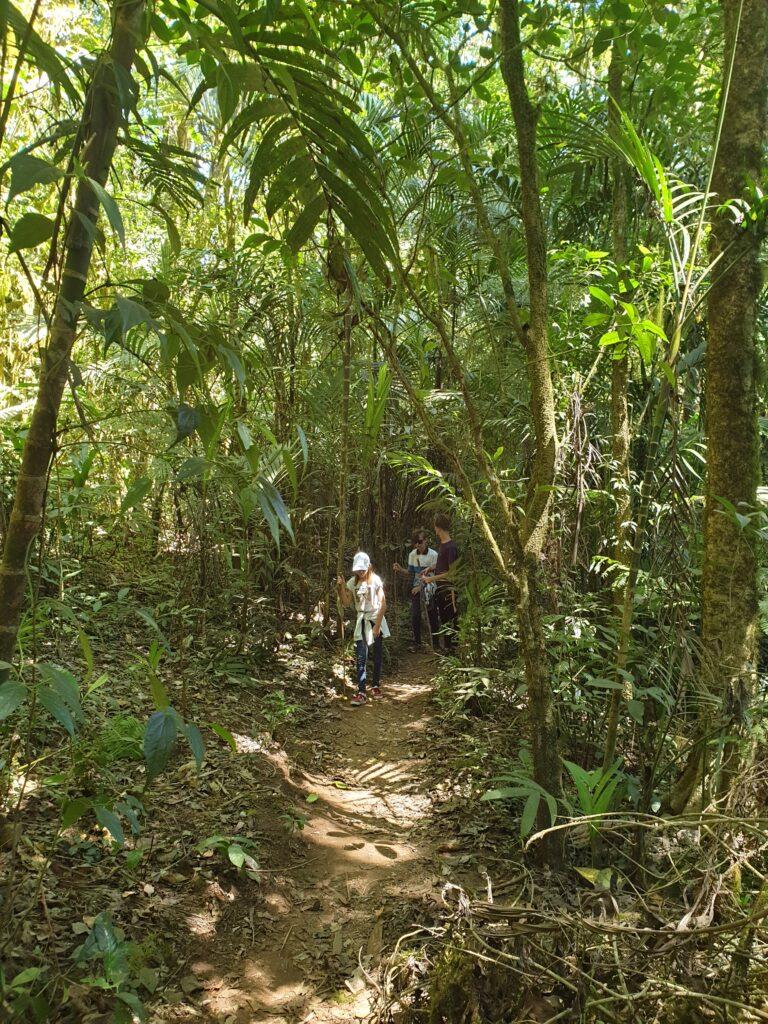 Bali Forêt primaire