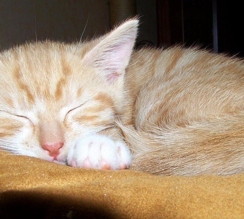 chat-endormi