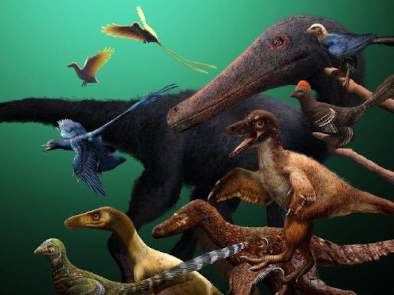 dinosaures-oiseaux