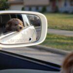 chien auto