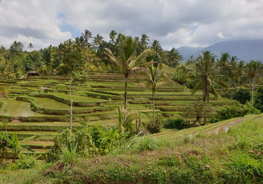 Bali Jatiluwih