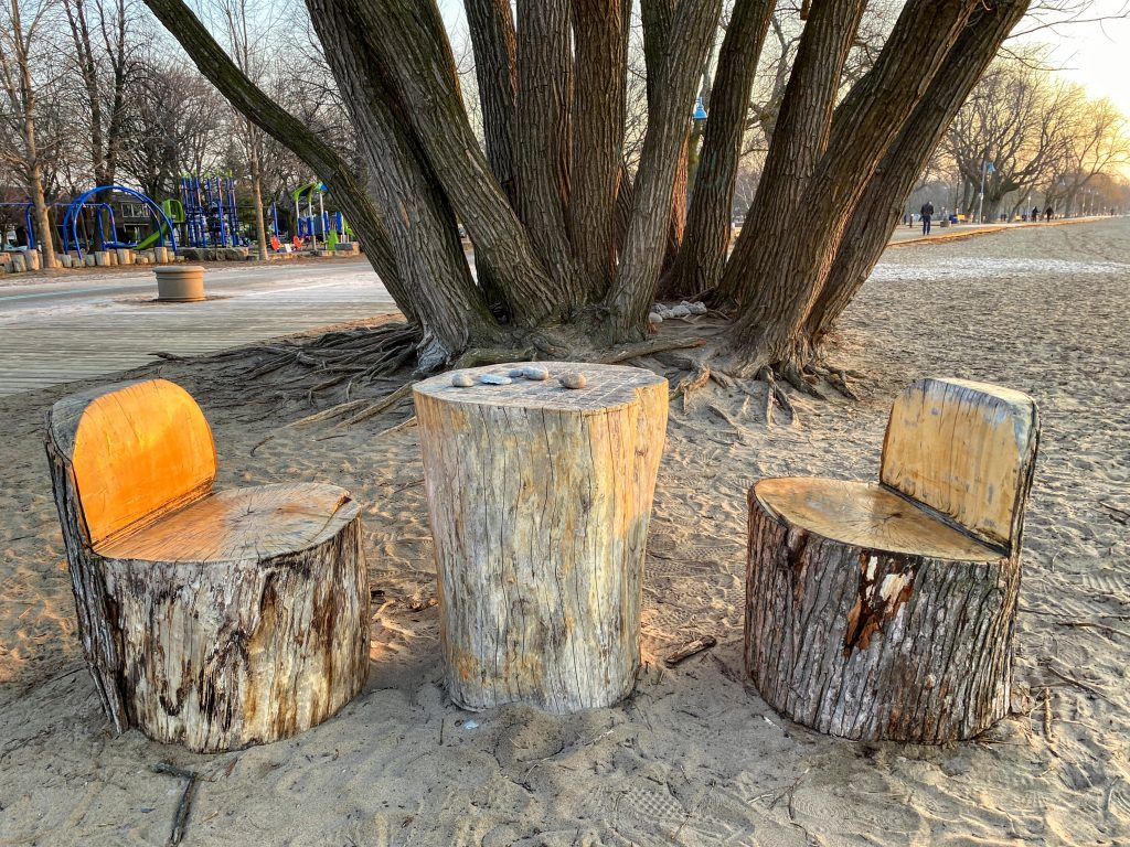 troncs d'arbre Beach Beaches plage Woodbine