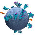 covid, coronavirus, variant