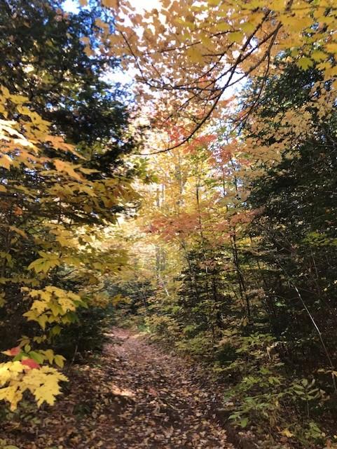 arbrea automne