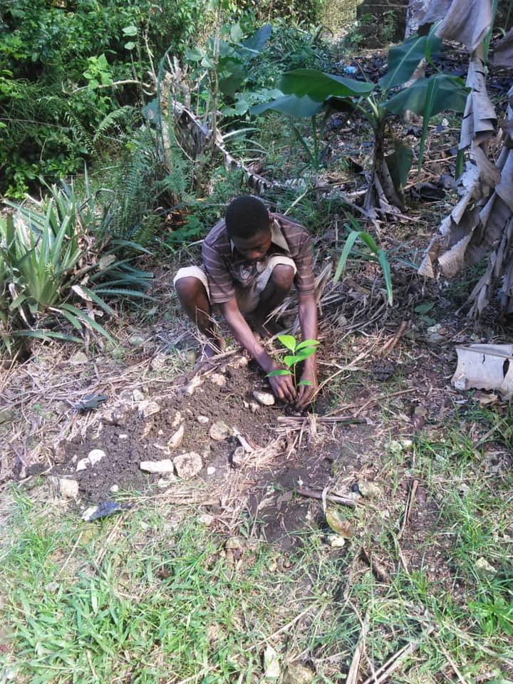 planter des arbres en Haïti