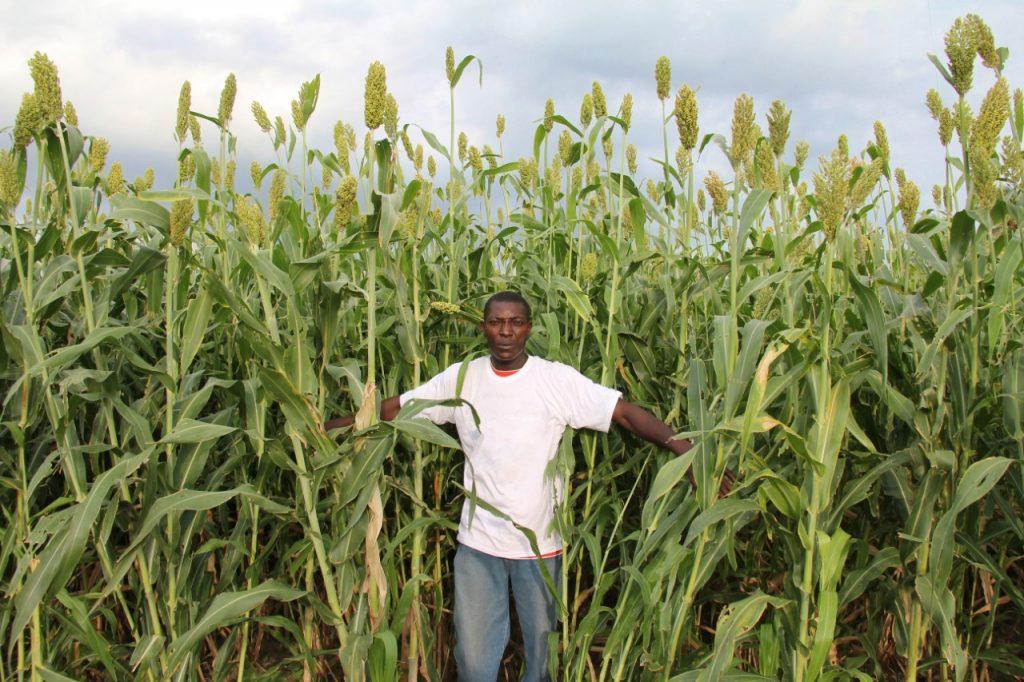Producteur de coton, Haïti