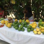 covid, Haïti, plantes médicinales