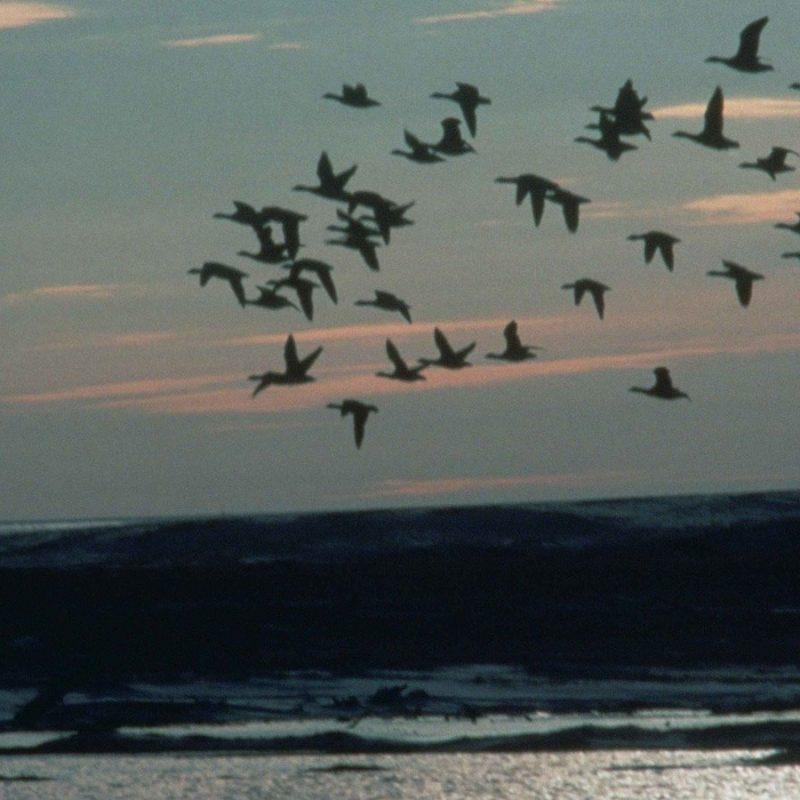 oiseaux-nez-odorat