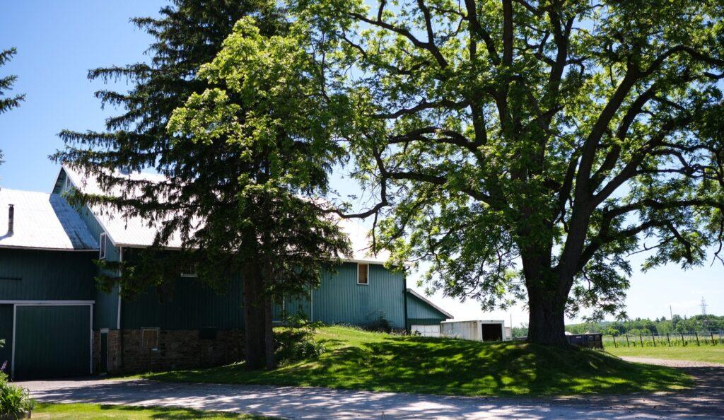 vignoble Pearl Morissette, Niagara